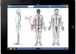 Osteopatia e chiropratica. Facciamo il punto (da quotidianosanita.it)